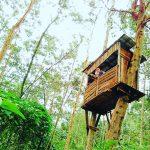 Rumah Pohon Petak 9