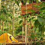 camping di wana wisata petak 9 via bentara id